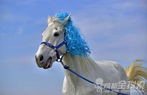 作为一匹马,发型还是很重要的!