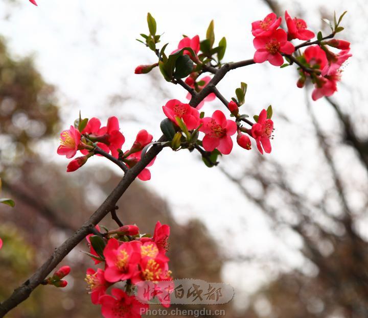 彼岸聆听一笺春花柳枝的诗语【原创诗】 - 高天流云 - 高天流云的博客